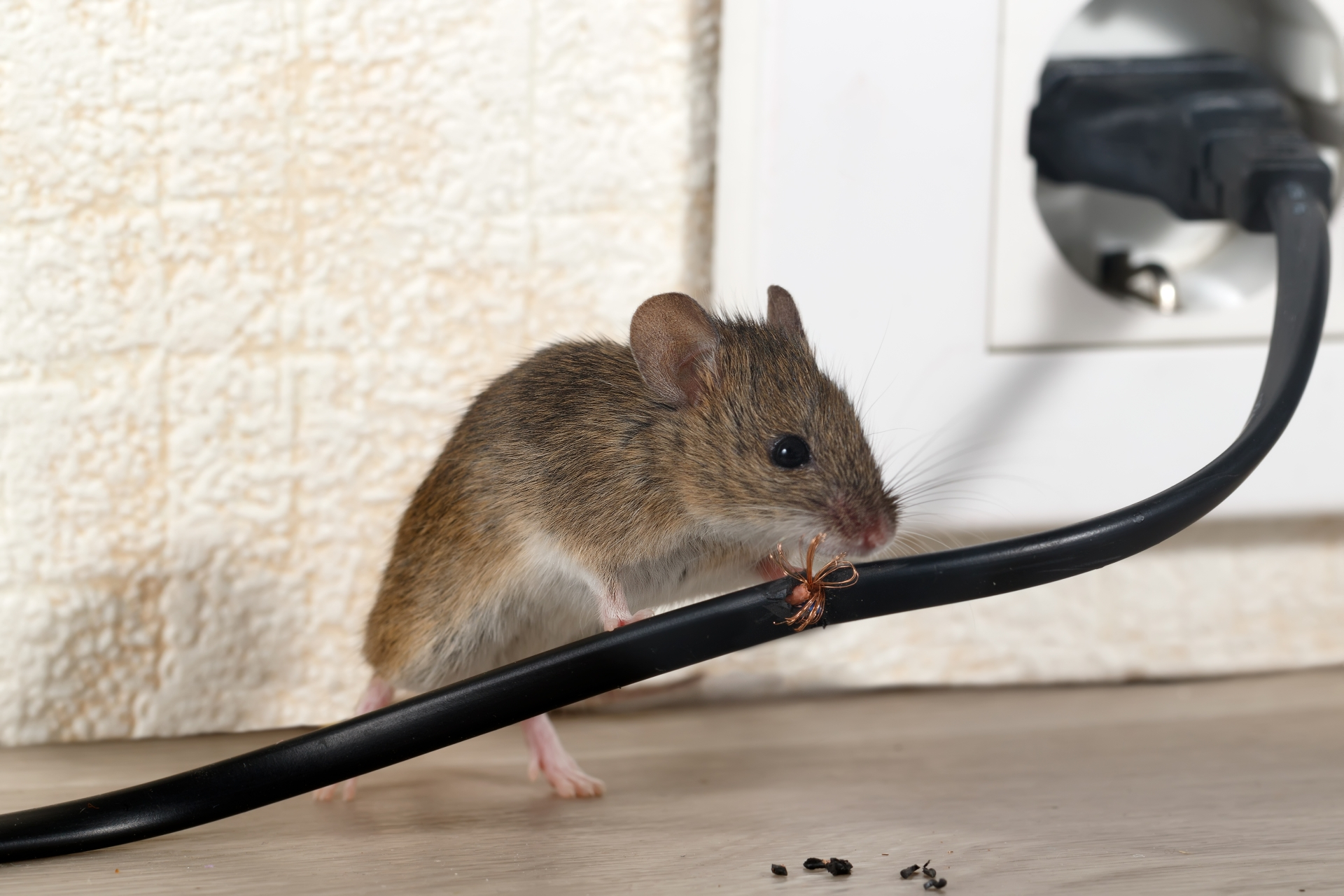 Mice Infestation, Pest Control in Staines-upon-Thames, Egham Hythe, TW18. Call Now 020 8166 9746